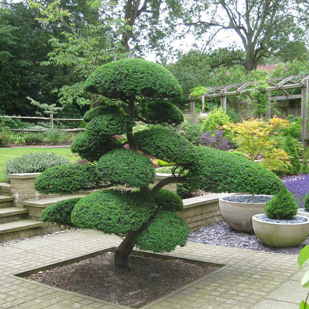 jardin zen jardin japonais avec arbre taill en nuage. Black Bedroom Furniture Sets. Home Design Ideas