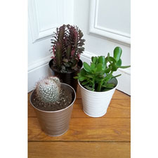 Photo de Cactus mix - lot de 3 avec cache pot en zinc - variétés en mélange