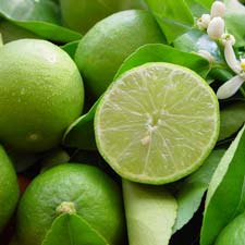 Photo de Lime de Tahiti, Citrus latifolia